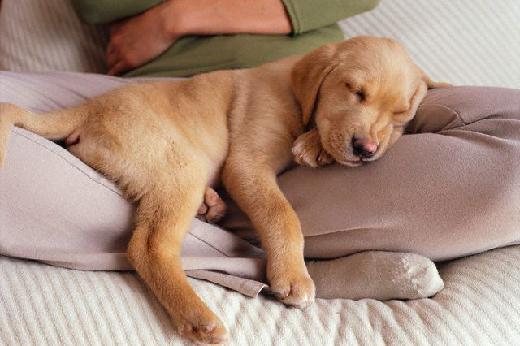 perchè il cane mi dorme addosso