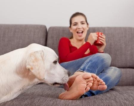 perché i cani leccano i piedi al padrone