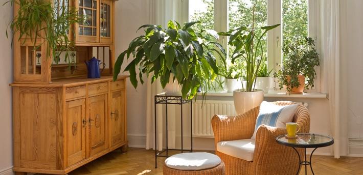 perché tenere delle piante dentro casa