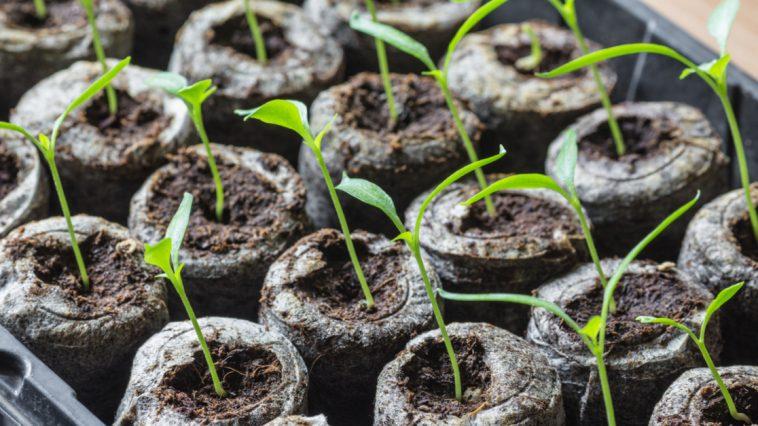 coltivazione indoor