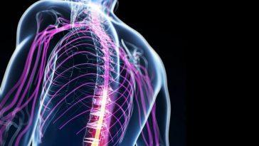 perché quello nervoso si chiama sistema e non apparato