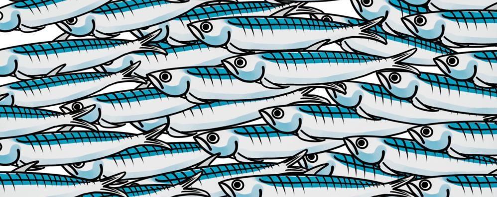perche si chiamano sardine