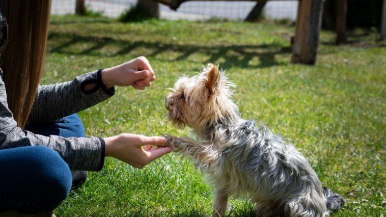 perchè addestrare un cane